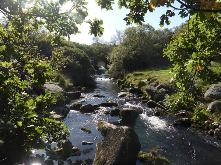 Weir 3