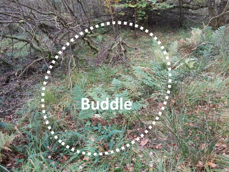 Buddles 1
