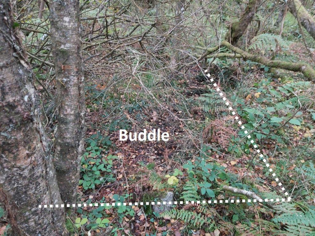 Buddle 2