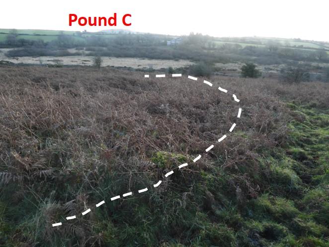 Pound C3