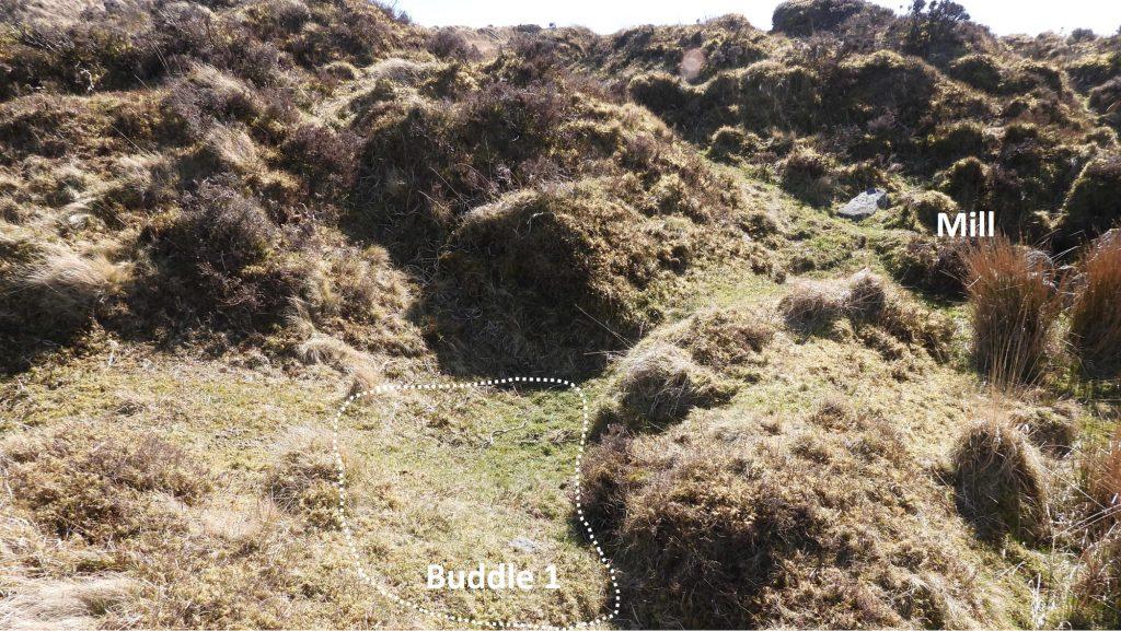 Buddle 1